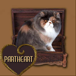 Partheart cattery